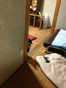 20121107-061202.jpg