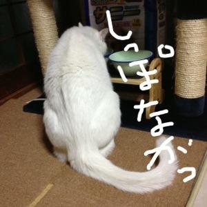 20121231-060212.jpg