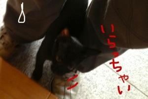 20130811-032937.jpg