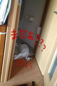 20130820-052942.jpg
