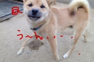 20130923-043405.jpg