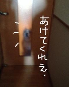 20131029-052858.jpg