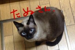 20140126-051909.jpg