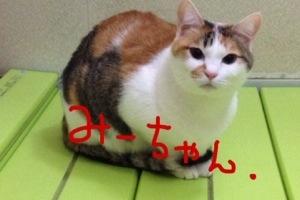 20140126-051932.jpg
