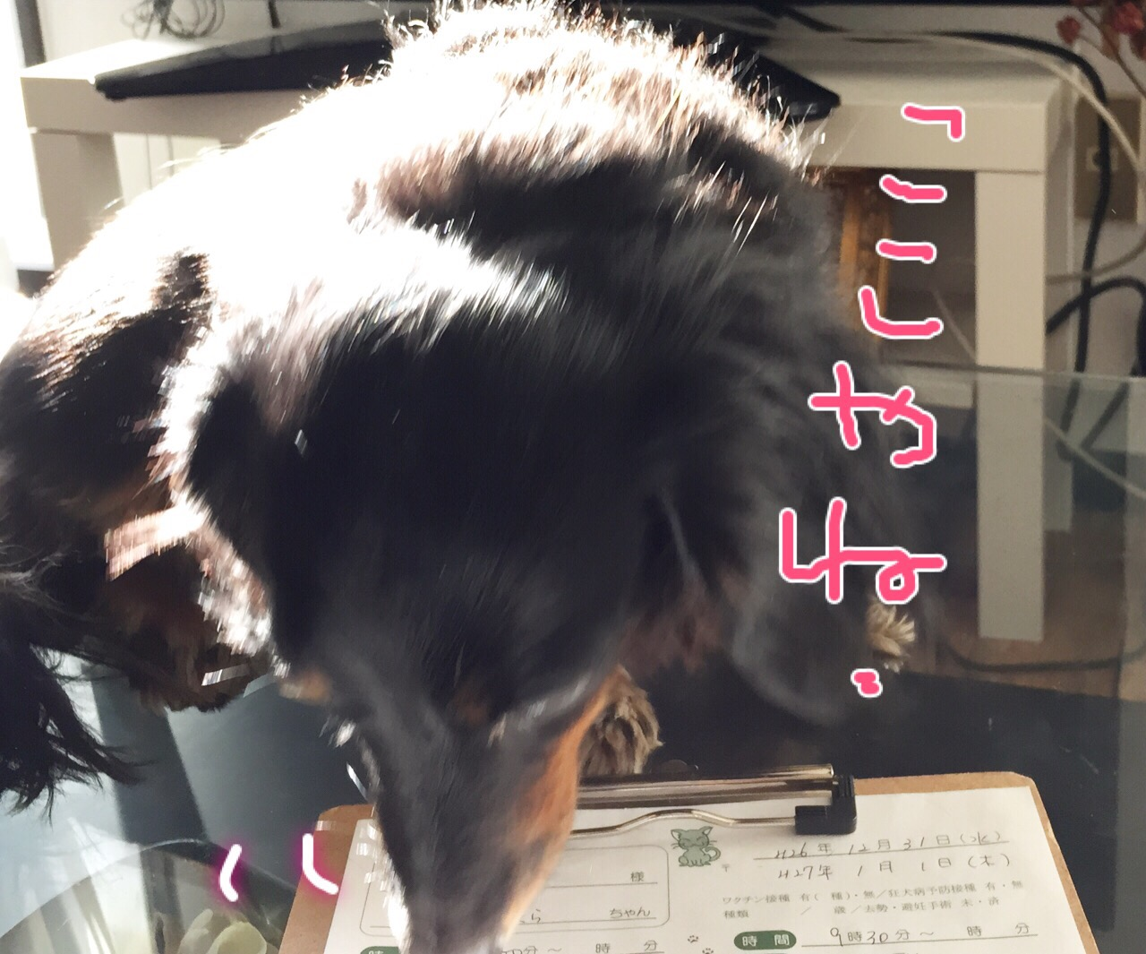 IMG_8647.JPG
